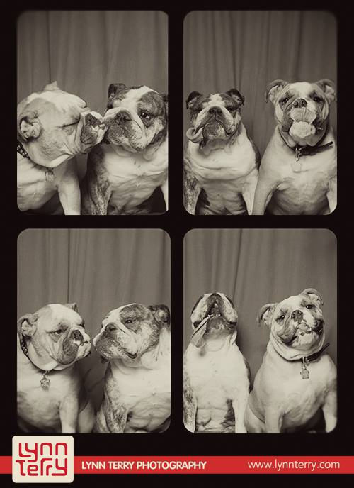 dogs in photo booths by lynn terry (3)