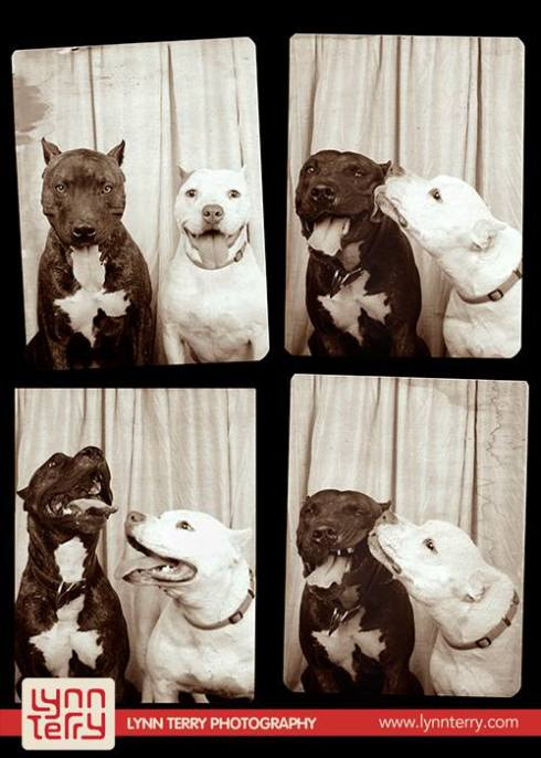dogs in photo booths by lynn terry (4)