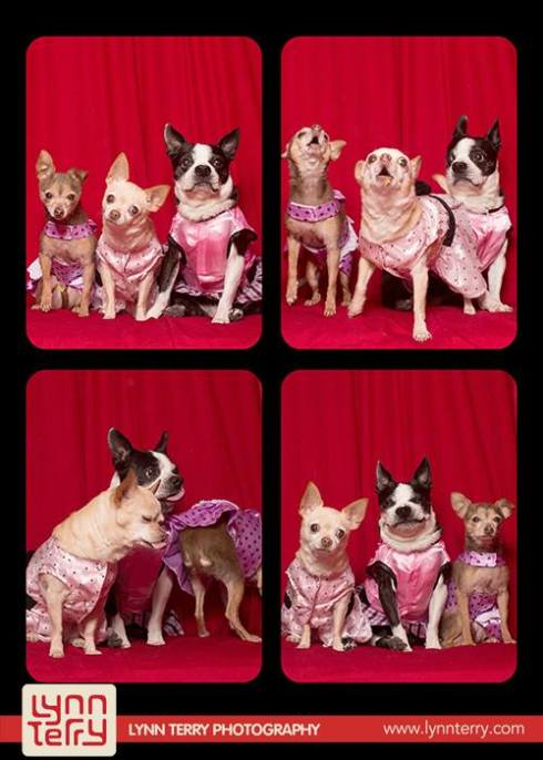 dogs in photo booths by lynn terry (5)