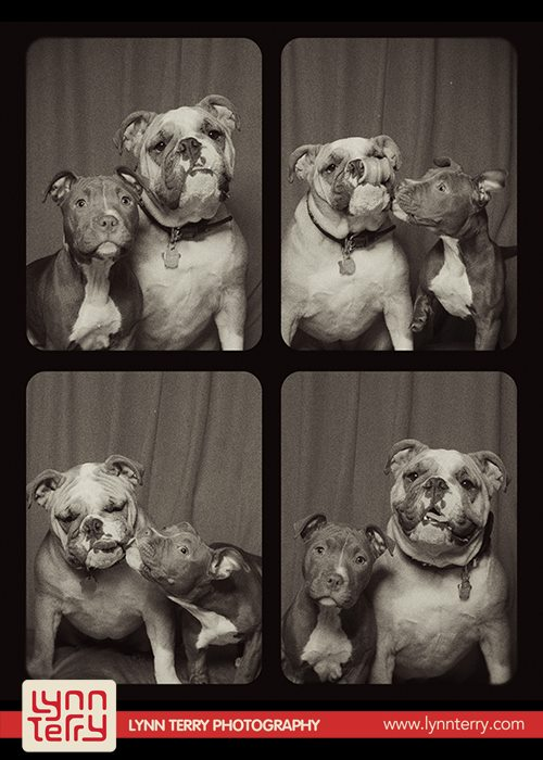 dogs in photo booths by lynn terry (6)