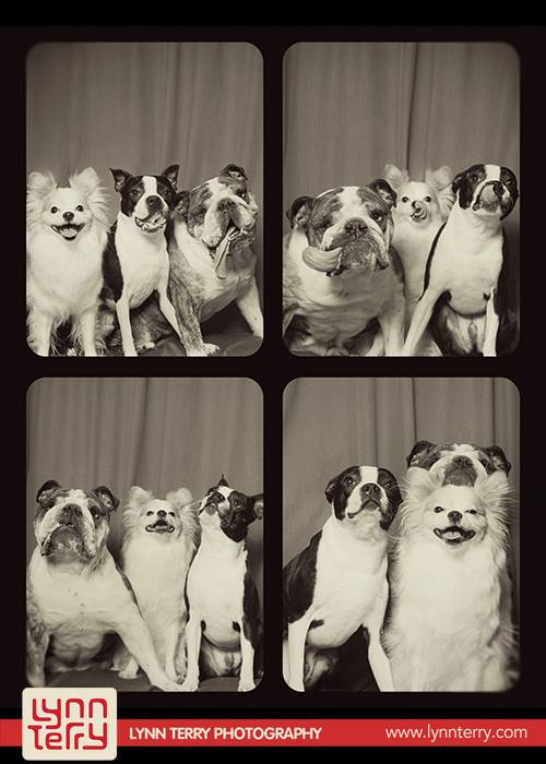 dogs in photo booths by lynn terry (7)