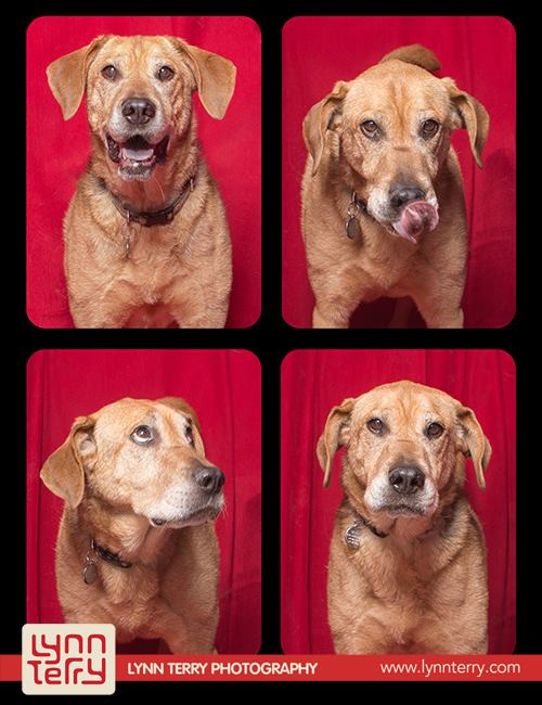 dogs in photo booths by lynn terry (8)