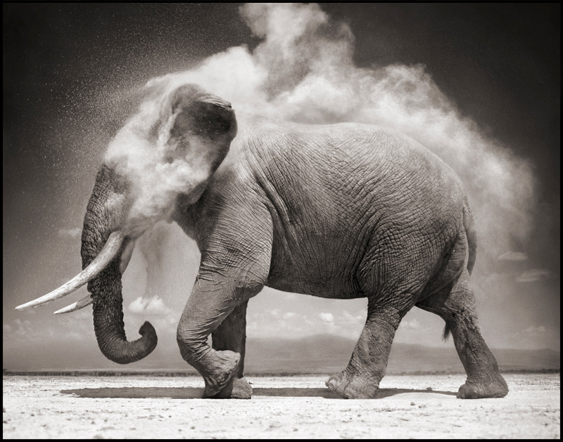Picture of the Day: Elephant Dust Bath