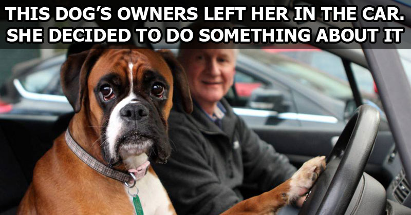 This Dog's Owners Left Her in the Car. She Decided to Do Something About It