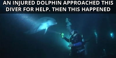An Injured Dolphin Approached this Diver for Help. Then ThisHappened