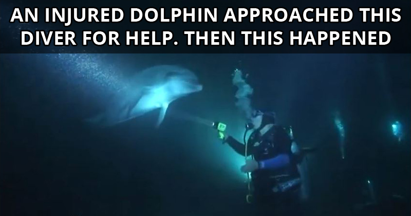 An Injured Dolphin Approached this Diver for Help. Then This Happened