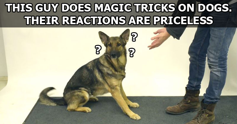 MAGIC-TRICKS-FOR-DOGS-VIDEO