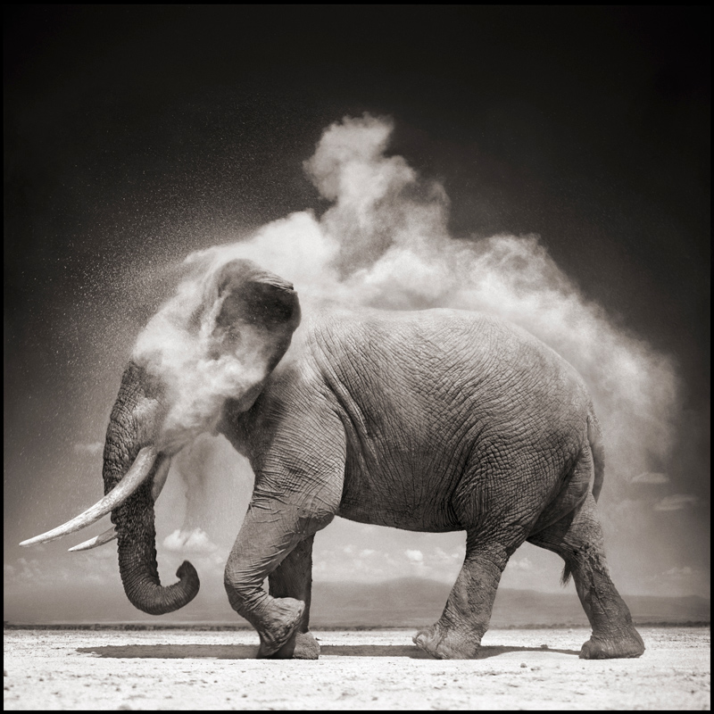 Nick-Brandt-courtesy-of-ATLAS-Gallery_London