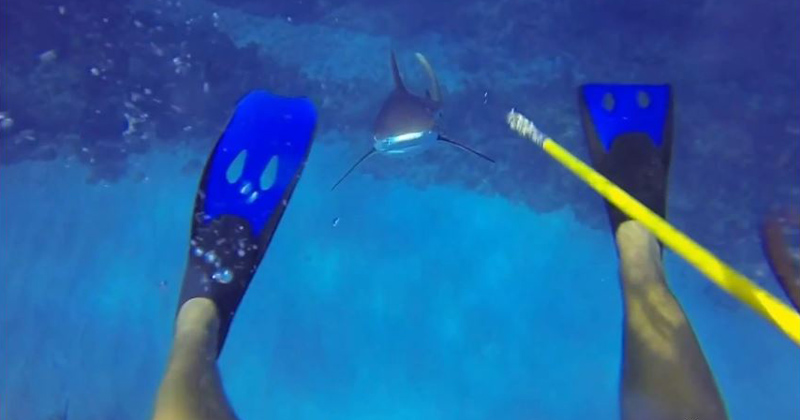 This Diver Survived a Shark Attack and He has the GoPro Footage to ProveIt