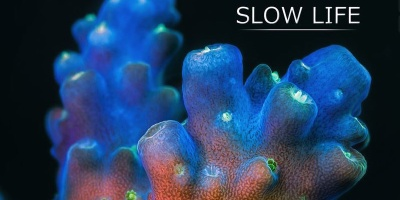 The Unseen Beauty of Slow Moving Marine Life. A 150,000 Photo Time-Lapse
