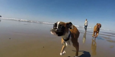 This Dog was Born with Two Legs. This is His First Time at the Beach