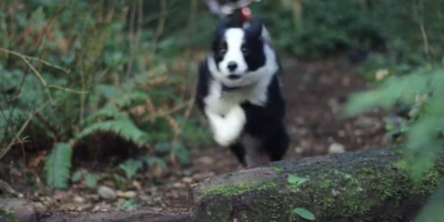 This Might Be the World's Fastest TrailDog