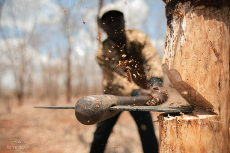 close-up-of-axe-chopping-tree-rafael-hernandez