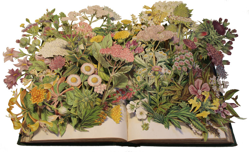 Discarded Books Transformed Into Exploding 3D Collages by Kerry Miller (6)