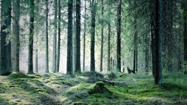 forest-jyvaskyla-finland