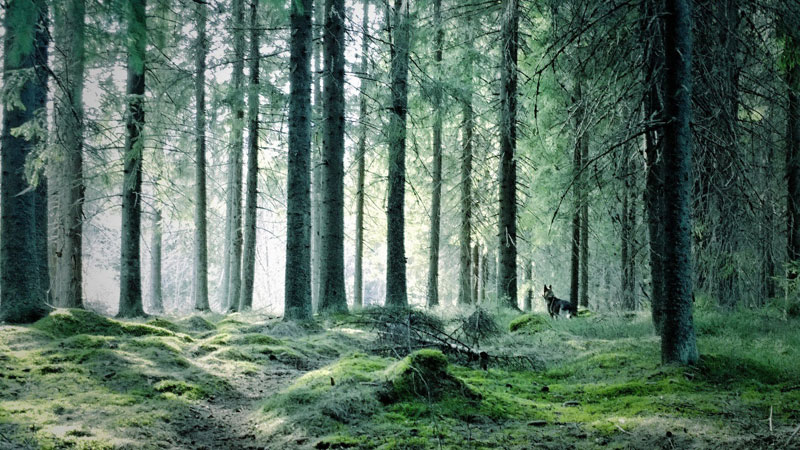 Picture of the Day: ForestGreen