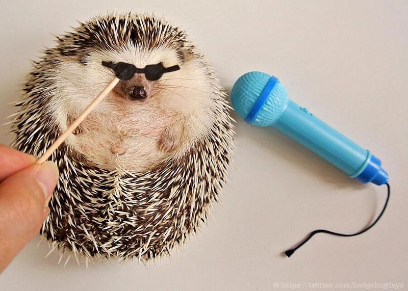 Meet Marutaro, the Hedgehog the World Needs RightNow
