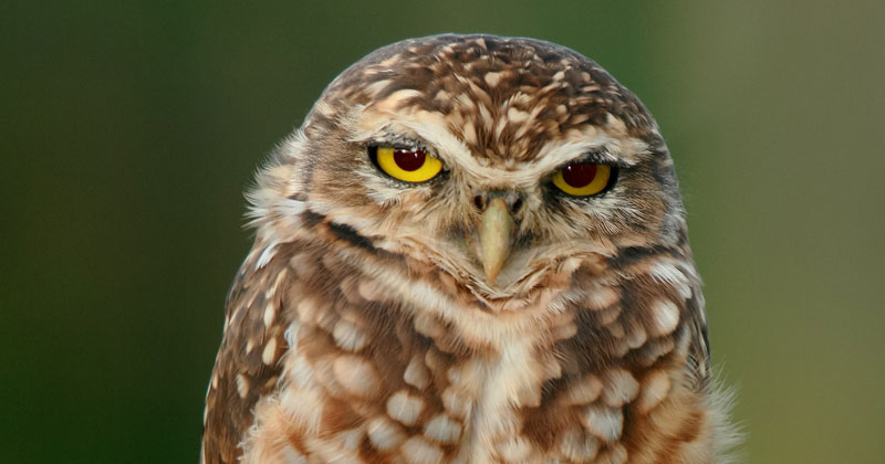 Picture of the Day: Just an Owl Standing on OneFoot