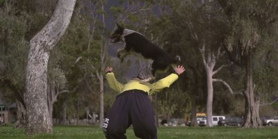 Just a Slow Motion Video of a Dog DoingParkour