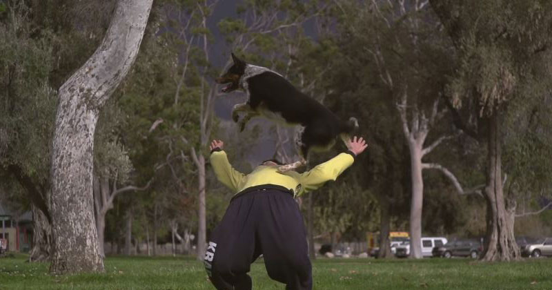 slow-motion-video-of-a-dog-doing-parkour
