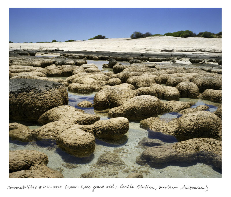 the oldest living things in the world by rachel sussman (4)