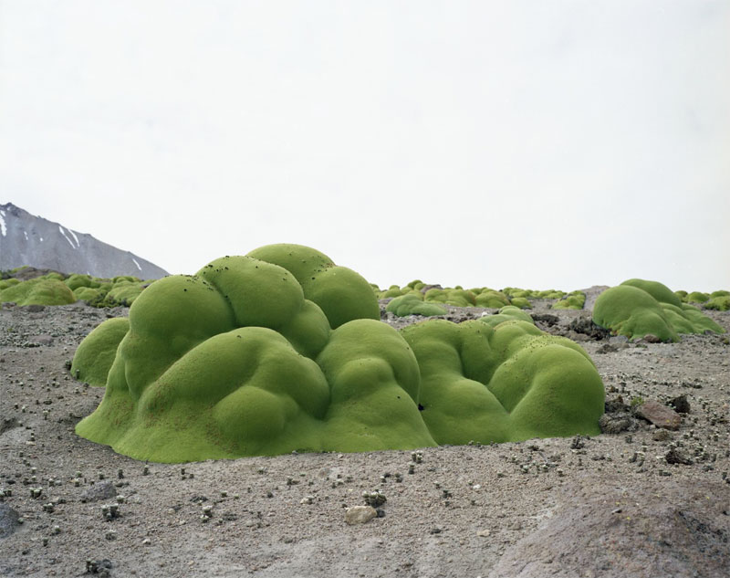 These are Some of the Oldest Living Things in the World