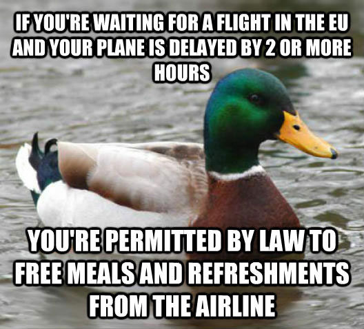 tips from the worlds smartest duck best of actual advice mallard (15)