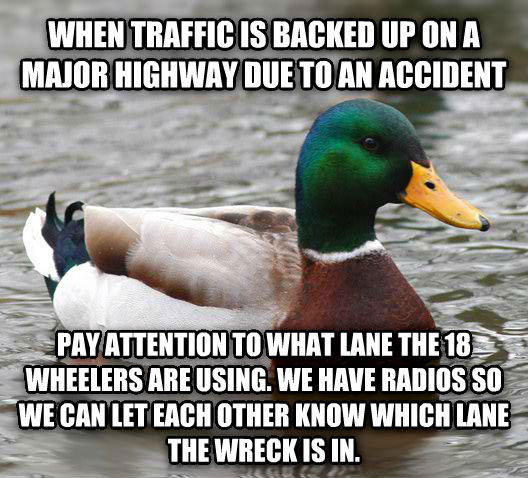 tips from the worlds smartest duck best of actual advice mallard (18)
