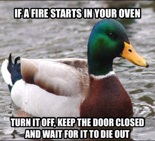 tips from the worlds smartest duck best of actual advice mallard (20)