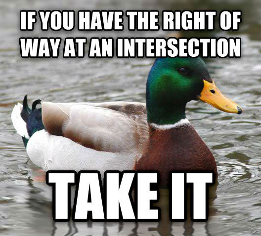 tips from the worlds smartest duck best of actual advice mallard (23)