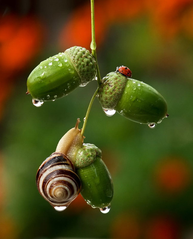 unseen world and beauty of snails by Vyacheslav Mischenko (1)
