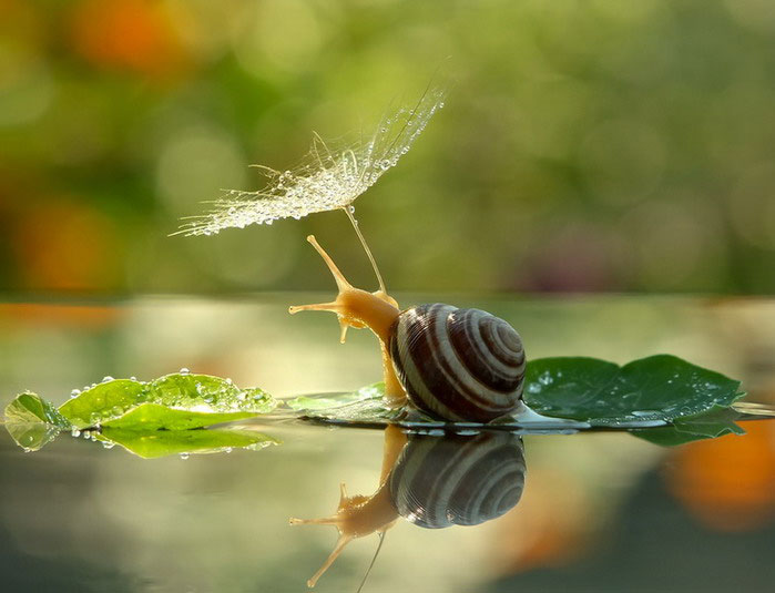 unseen world and beauty of snails by Vyacheslav Mischenko (10)