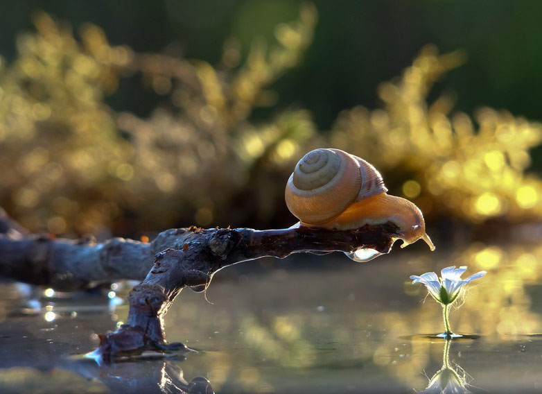 unseen world and beauty of snails by Vyacheslav Mischenko (11)