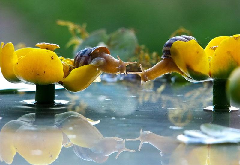A Snail's Life