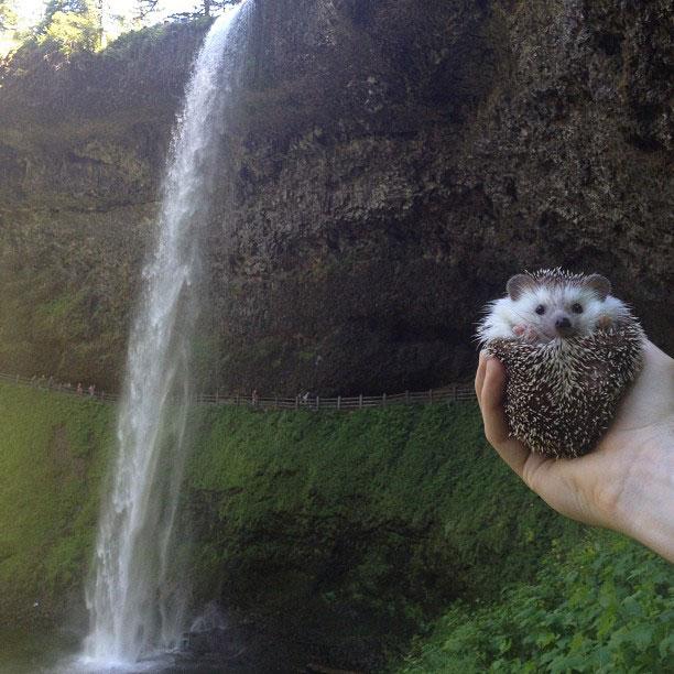 biddy the hedgehog world traveler instagram (10)
