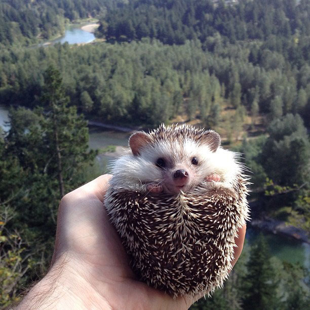 biddy the hedgehog world traveler instagram (4)