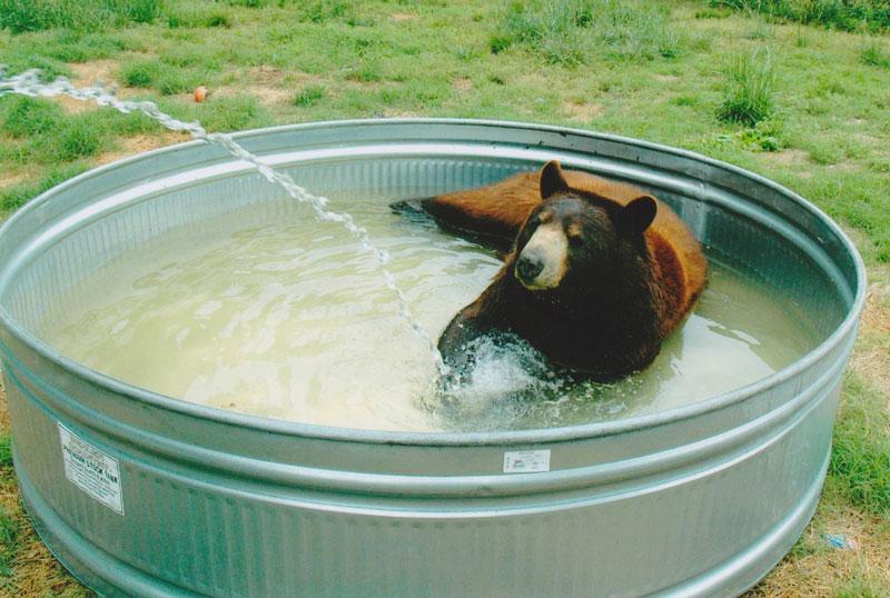 rescate arca blt león del oso del tigre de Noé (4)