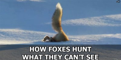 How Foxes Hunt What They Can'tSee