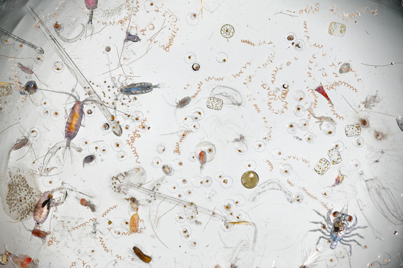 This is What a Handful of Magnified Seawater LooksLike