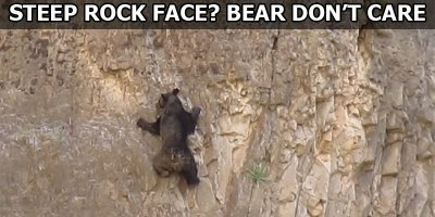 This is What Rock Climbing Bears LooksLike