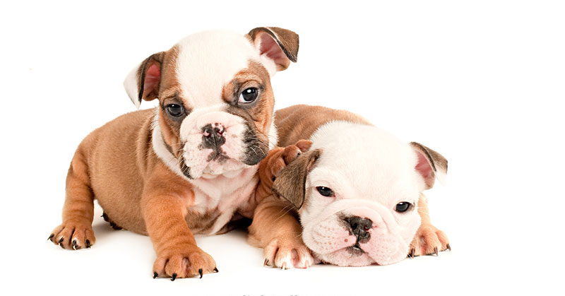 What-17-Different-Breeds-of-Dogs-Look-Like-at-6-Weeks-Old-by-j.nichole-smith-little-and-large-(cover)