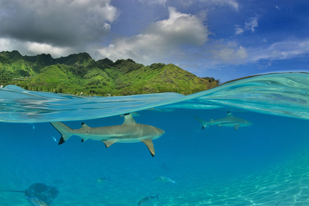 34 small squale 12 Amazing Entries from the 2014 Nat Geo Traveler Photo Contest