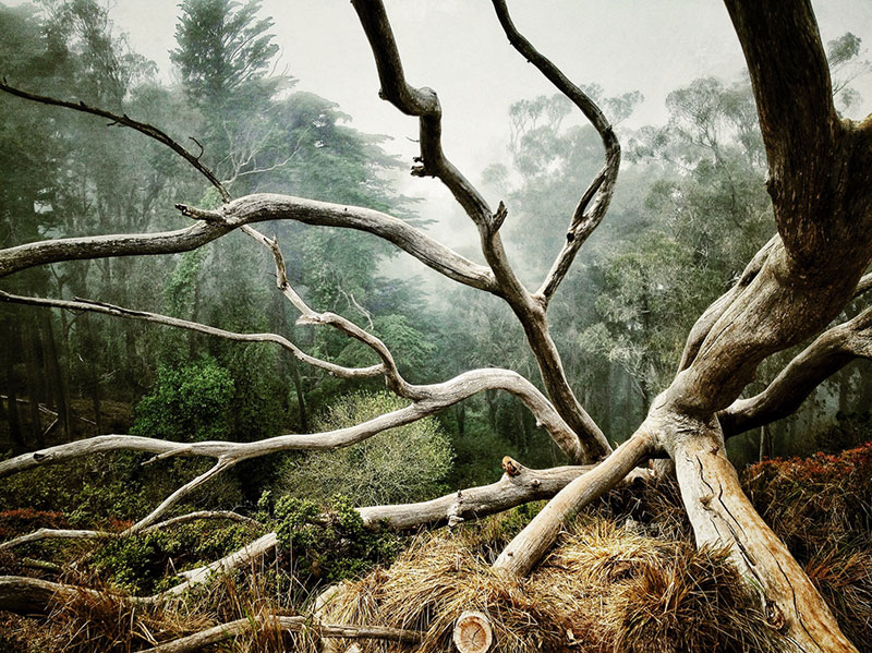 52-AARON-PIKE-1stTrees