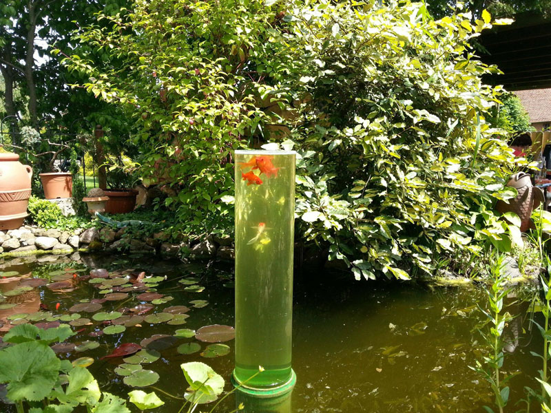 Picture of the Day: A Watchtower forGoldfish