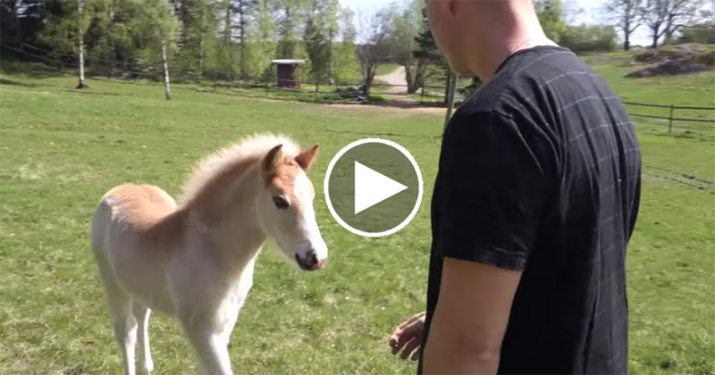 Watch this Horse Whisperer Chat with a Colt
