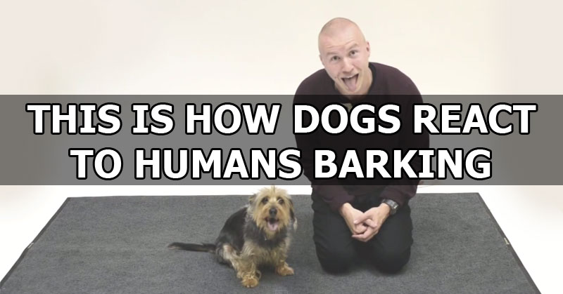 Report Dogs Barking All Day