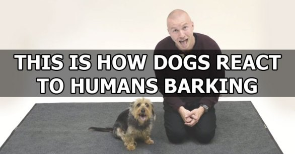 how-dogs-react-to-human-barking-video