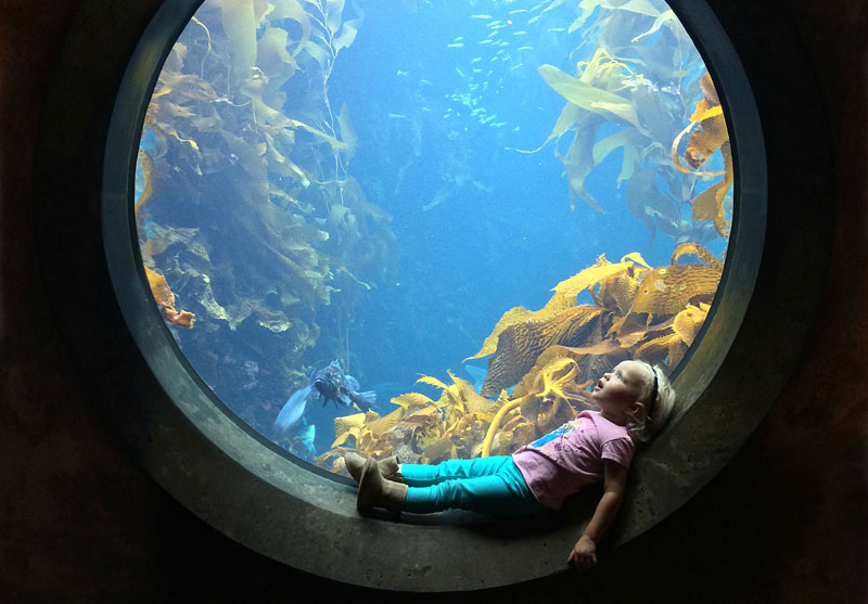 Picture of the Day: Awestruck at theAquarium