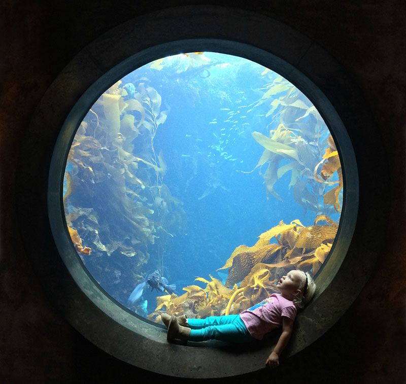 sitting in circular window at the aquarium The Sifters Top 75 Pictures of the Day for 2014