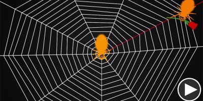 Did You Know Spiders Tune Their Webs Like a Guitar?
